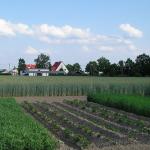Crop Rotation Organic Gardening