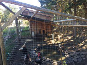 bear proof chicken coop
